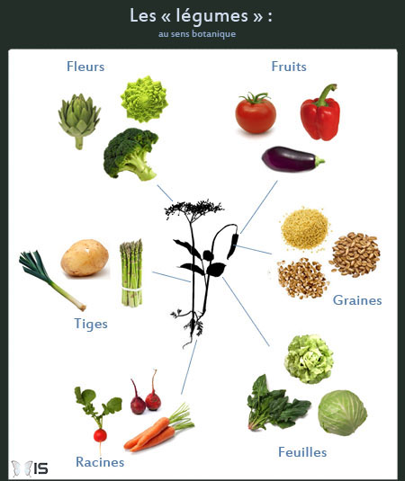 Intra science quelle est la diff rence entre un fruit et - Fruit ou legume en i ...