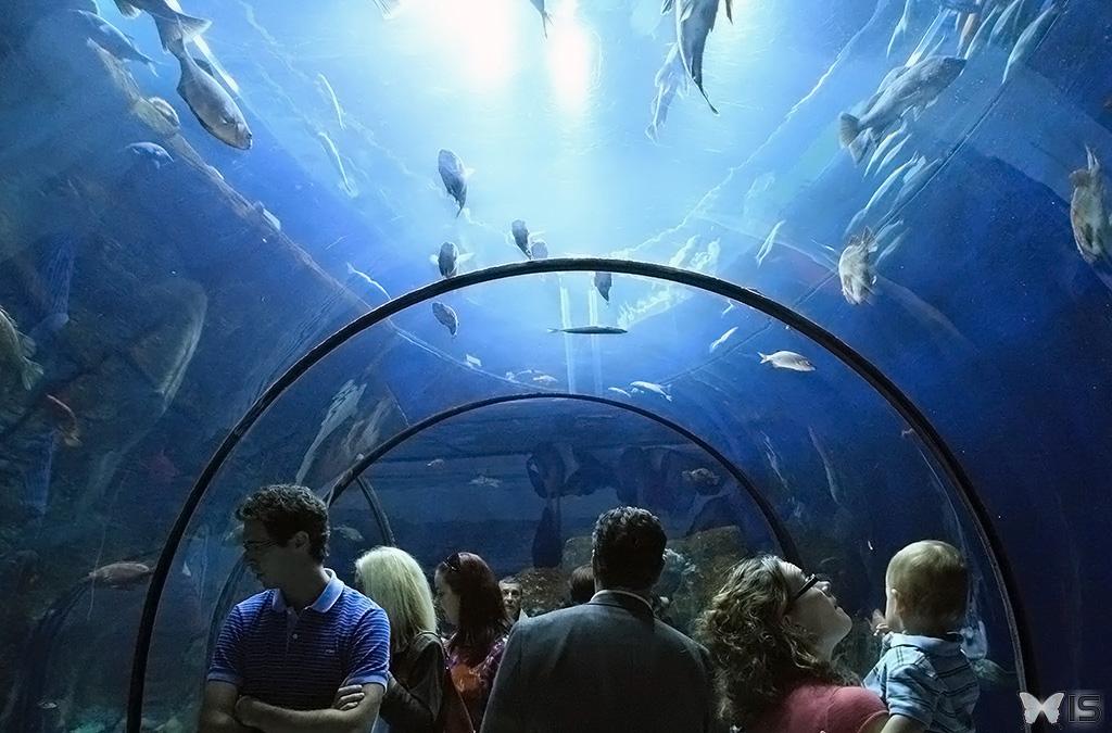 Intra science visite de l 39 aquarium du qu bec for Acoiriome de poisson