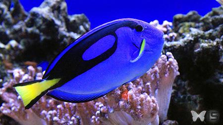 Intra science visite de l 39 aquarium du qu bec d tails for Poisson clown prix
