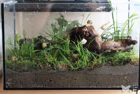 terrarium escargot
